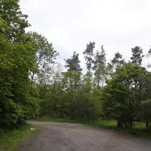 Bleichsee